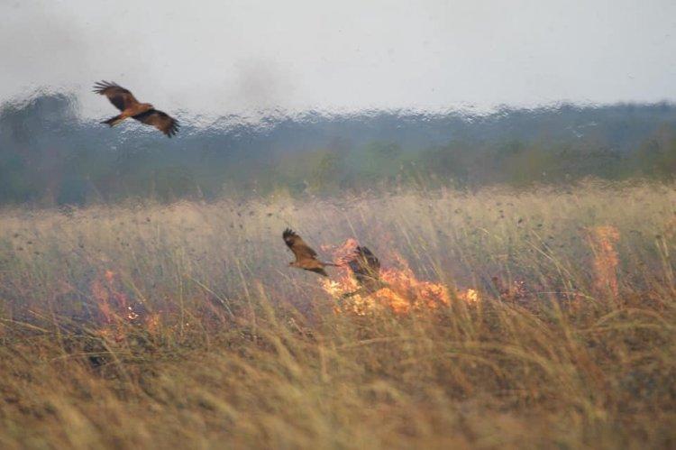 Incendiile de vegetaţie - un pericol pentru viaţă şi mediu
