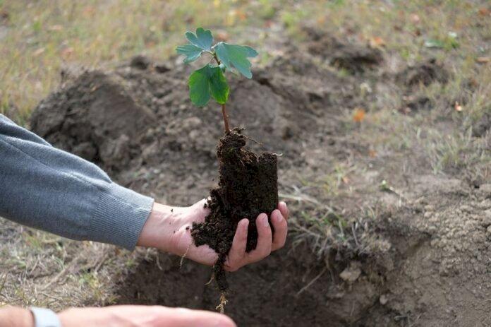Pentru (re)împădurirea Moldovei