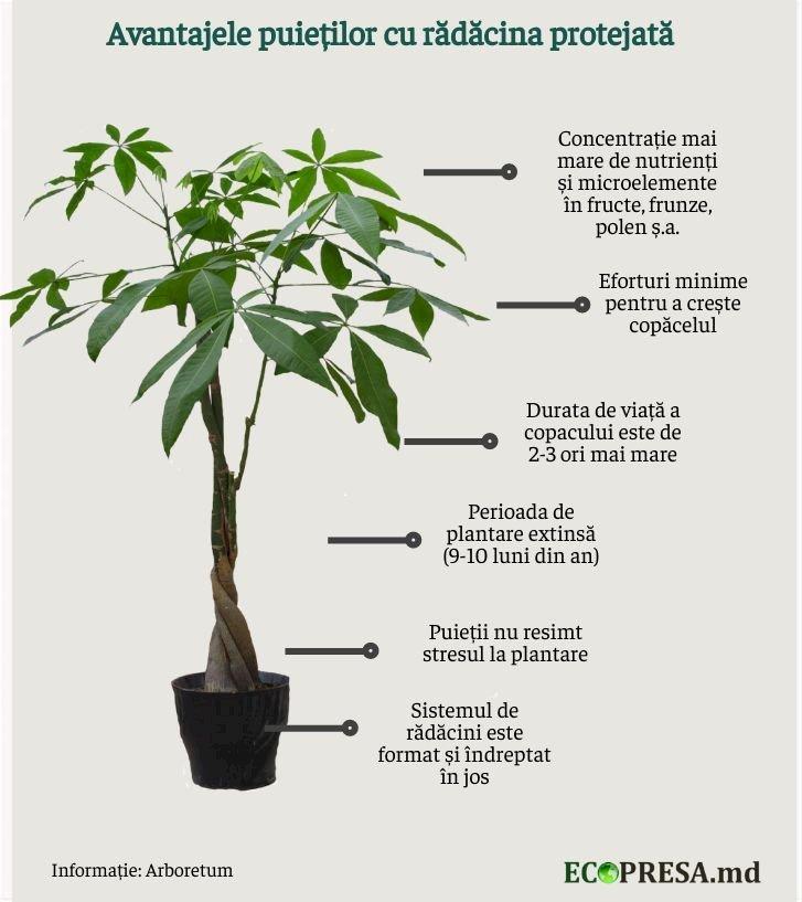 Infografic realizat de Ecopresa.md