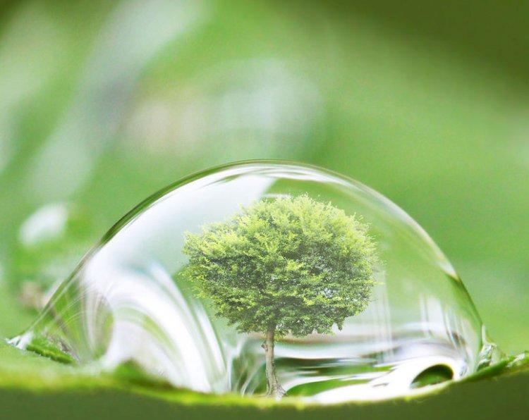 (doc) Organizațiile de mediu, îngrijorate de lipsa prevederilor de mediu în programul Guvernului Chicu