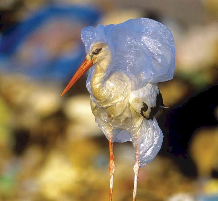 O viaţă fără gunoi