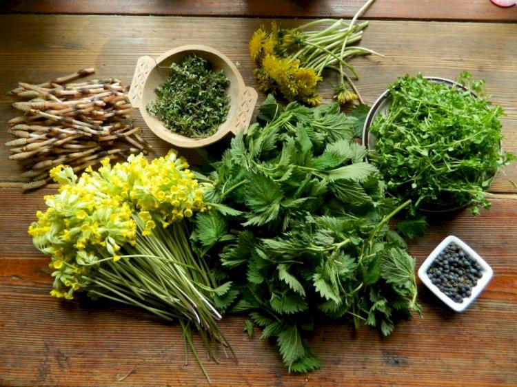 Verdețuri de primăvarăcare-ți tonificăorganismul
