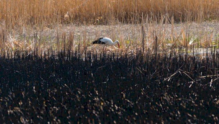 Crimă asupra naturii pe timp de primăvară