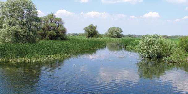 Delta Dunării: Paradisul păsărilor