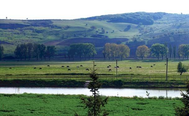 Râul Cogâlnic