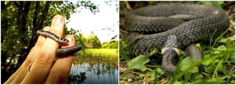 Despre şerpi... cu mult calm (1)