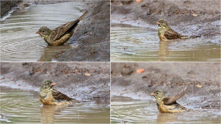 Cum înving păsările canicula?