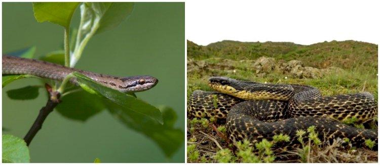 Despre şerpi... cu mult calm (2)