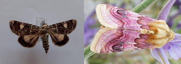 Ați găsit aceste molii rare?