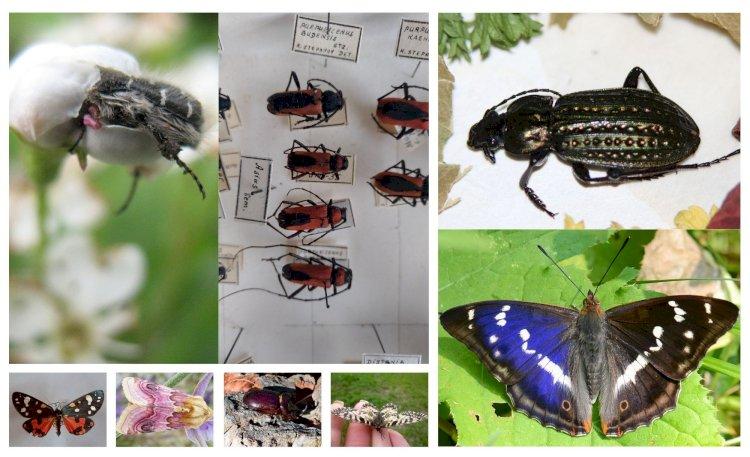 Anunț: concursul privind distribuția insectelor rare pe teritoriul Republicii Moldova s-a încheiat!