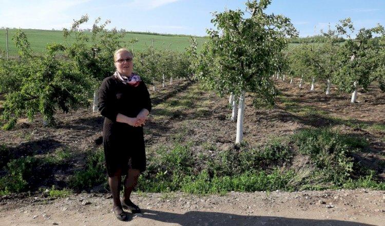 În Moldova se va deschide prima fermă eco de porci din țară