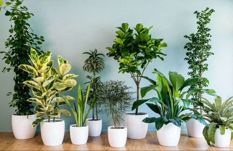 Îngrijirea plantelor de interior