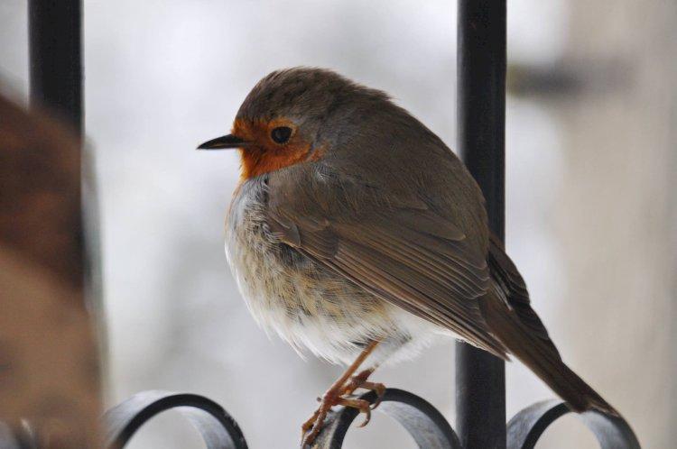 Cum rezistă păsările sălbatice în faţa iernii?