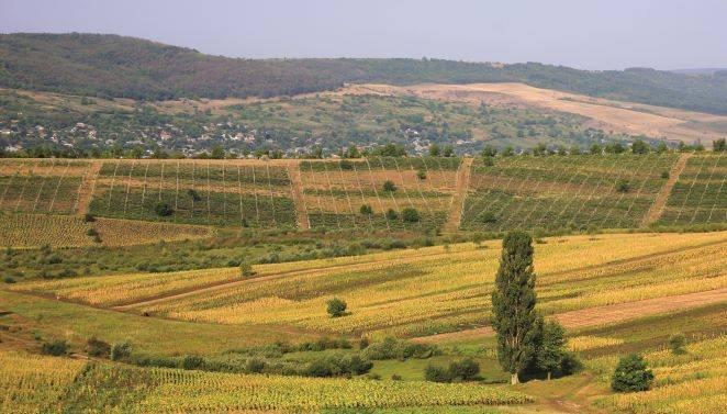 Codreanca - satul dintre Codri
