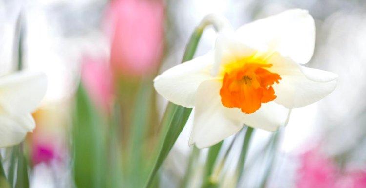 Femeile, primăvara vieţii