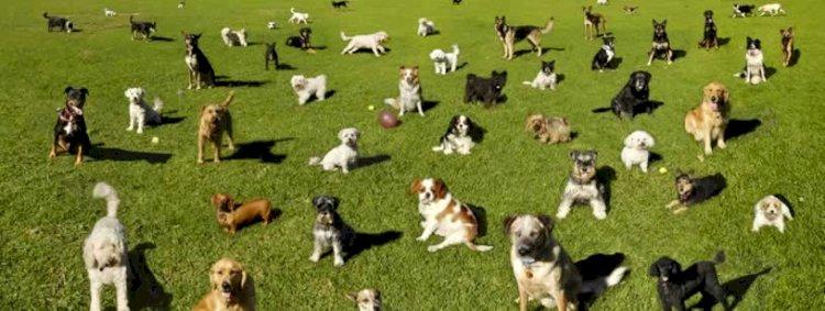 Sterilizarea câinilor: o problemă urgentă