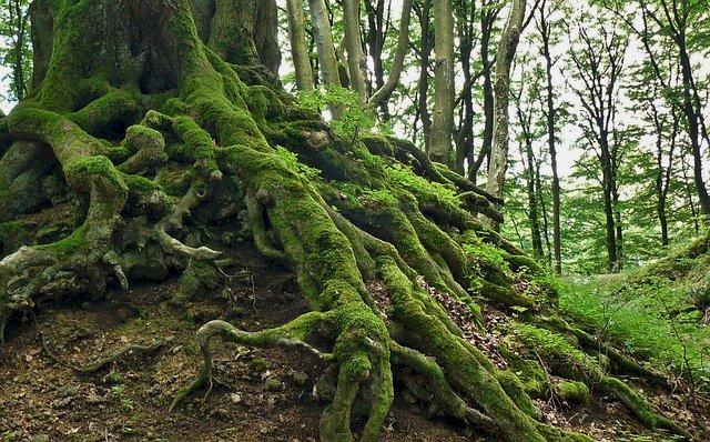 Rădăcinile