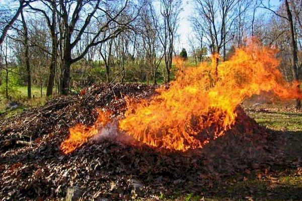 Nu ardeţi frunzişul!