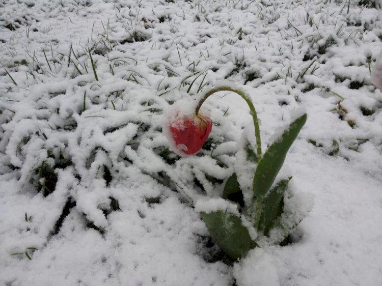 Iarna din aprilie